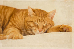 Orange tabby cat sleeping Royalty Free Stock Photo
