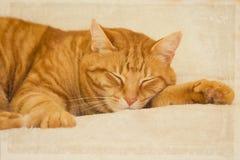 Orange tabby cat sleeping. Cute, cuddly orange tabby cat sleeping Royalty Free Stock Photo