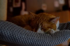 Orange Tabby Cat Sleeping on Gray Textile Stock Photo