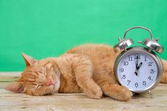 Orange Tabby cat sleeping next to alarm clock daylight savings. Orange ginger tabby cat sleeping on a wood table, green background next to an old fashioned alarm royalty free stock photos
