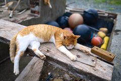 Orange Tabby Cat on Top of Brown Wooden Plank Near Brown Basketball during Daytime Stock Photo