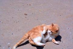 Orange Tabby Cats Rückseite an Lizenzfreies Stockbild