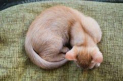 Orange tabby kitten from above Stock Images