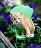 Orange tabby kitten cat on metal green chair in garden. Orange tabby kitten sits in a mini metal green garden chair in an old wooden planter with purple plants stock images