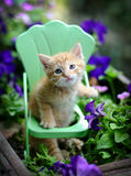 Orange tabby kitten cat in chair in a flower garden Royalty Free Stock Photo