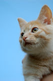 Orange tabby kitten portrait. Stock Image