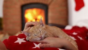 Orange tabby kitten sleep on woman chest at christmas time - medium close stock video