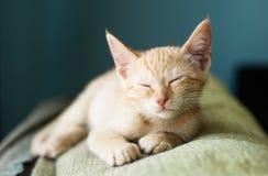 Orange tabby kitten sleeping Stock Images