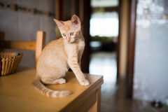 Orange tabby kitten on the table of the kitchen Royalty Free Stock Photos