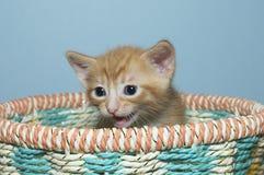 Orange tabby kitten 4 weeks old sitting in multi colored basket Stock Photos