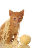Orange tabby kitten with yarn Royalty Free Stock Photo