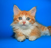Orange tabby kitty Royalty Free Stock Photo