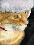 Orange tabby with winter hat Royalty Free Stock Photos