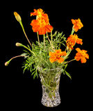 Orange Tagetes flowers in a transparent vase, close up Royalty Free Stock Images