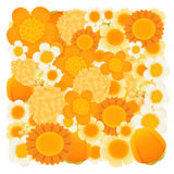Orange , tangerine floral background Stock Photos
