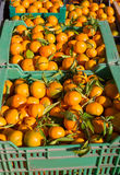 Orange tangerine fruits in harvest in a row baskets Royalty Free Stock Photos