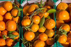 Orange tangerine fruits in harvest in a row baskets Stock Images