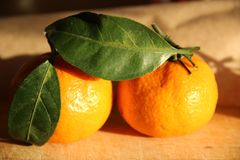 Orange tangerine with a green leaf on a branch stock photo