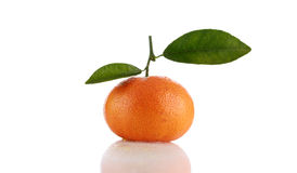 Orange or tangerine isolated on white Royalty Free Stock Photos