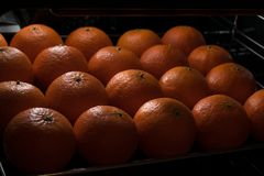 Orange tangerines lie in rows in a container. With poor lighting Stock Image