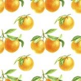 Orange Tangerinezeichnung im Aquarell stockbilder