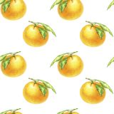 Orange Tangerinezeichnung im Aquarell lizenzfreies stockfoto