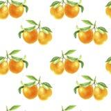 Orange Tangerinezeichnung im Aquarell stockfotos