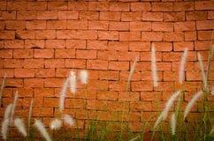 Orange tegelstenvägg med pälsgräs royaltyfri bild