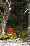 Orange tent pitched in the mossy shade near the shore in the Great Bear Rain Forest, BC Royalty Free Stock Image