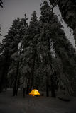 Orange tent in winter forest Stock Image