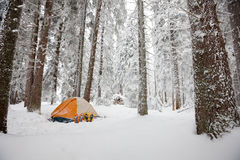 Orange tent in winter forest Stock Photos
