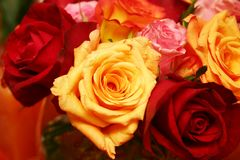 Orange thai roses 025. Bunch of fresh orange, red, yellow and pink roses stock photo