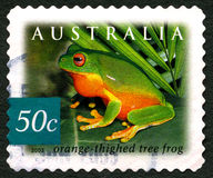 Orange Thighed Tree Frog Australia Postage Stamp Royalty Free Stock Photography