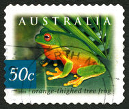 Orange Thighed Tree Frog Australian Postage Stamp Royalty Free Stock Photography