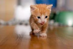 Orange three week-old kitten Stock Photo
