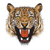 Orange Tiger Stockbild