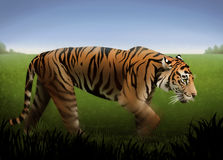 Orange Tiger. A painting of an orange tiger stalking through a field of green grass Royalty Free Stock Photo
