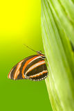 Orange Tiger Butterfly Royalty Free Stock Photos