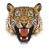 Orange tiger. Orange  tiger hand draw vector Stock Image