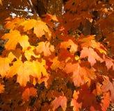 Orange Time Stock Image