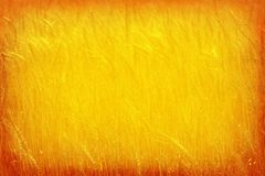 Orange to Gold Wheat Background Vignette Frame Royalty Free Stock Photos
