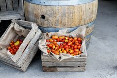 Orange Tomato on Brown Wooden Crate Stock Image