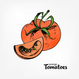 Orange tomatoes. Whole and part in a cut. Hand drawn colorful vector illustration with watercolor texture. Royalty Free Stock Photography