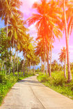 Orange toned coco palm trees alley. Tropical landscape with palms. Palm tree crown on blue sky. Stock Image