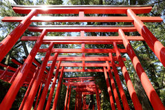 Orange torii gates  Stock Photography