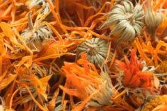 Orange torkade knoppblommor av calendulaen royaltyfri foto