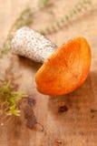 orange trä för asp- champinjon för brädeboletuslock Royaltyfri Bild