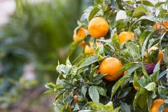 Orange träd arkivbild