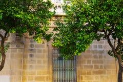 Orange träd bredvid fasaden av domkyrkan av Jeres, Andalusia, Spanien Arkivbild