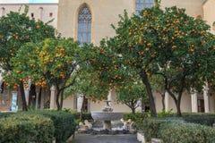 Orange träd i borggård av Complesso Monumentale di Santa Chiara In Naples royaltyfria bilder